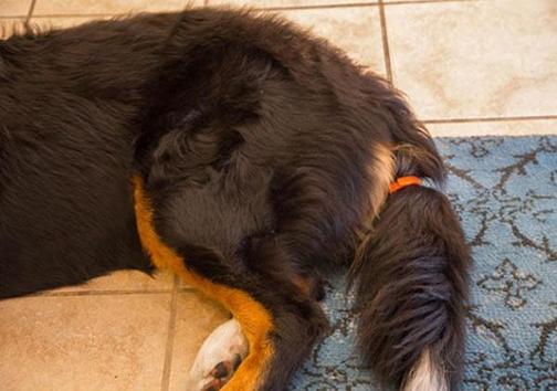 اختراع حسگری که احساس سگها را به شما میگوید + تصاویر