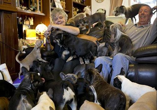 این زوج با 41 سگ همخانهاند! + تصاویر