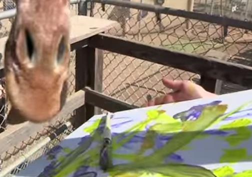 حیوانات یک باغوحش در نیوزیلند کار میکنند و هزینه نگهداری خود را تامین میکنند!
