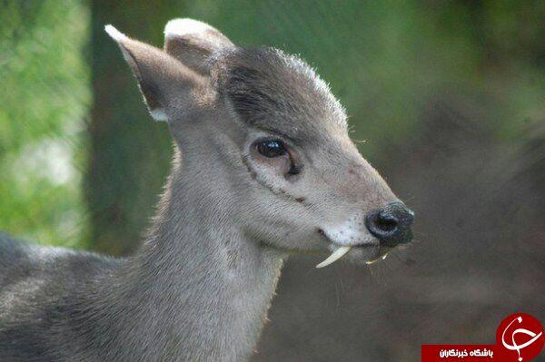 عجیب ترین حیوانات عالم خلقت + عکس