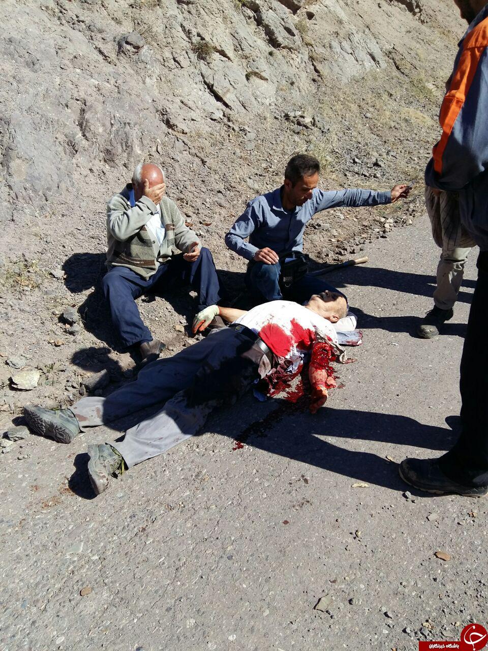 نبرد خونین مرد الموتی با یک قلاده خرس + تصاویر (18+)