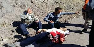 حمله خرس به پیرمرد ۸۰ ساله در الموت قزوین