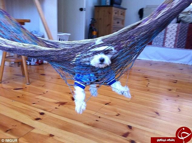 قیافه بامزه سگ های پشیمان + تصاویر