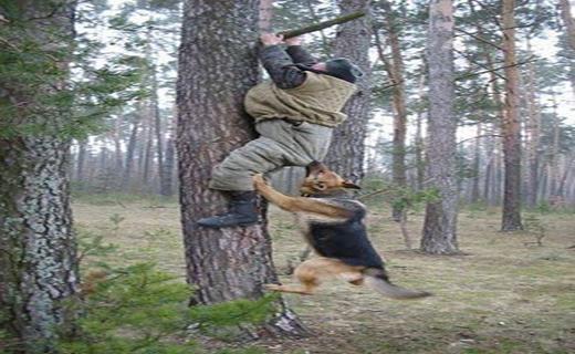 حمله های غافلگیرانه حیوانات+ تصاویر