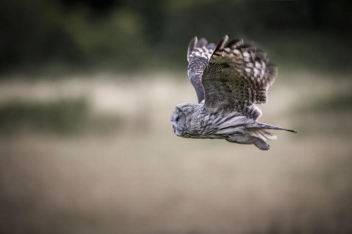 شکارچی آسمان