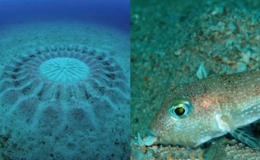 ماهی نقاش در دریا+ تصاویر