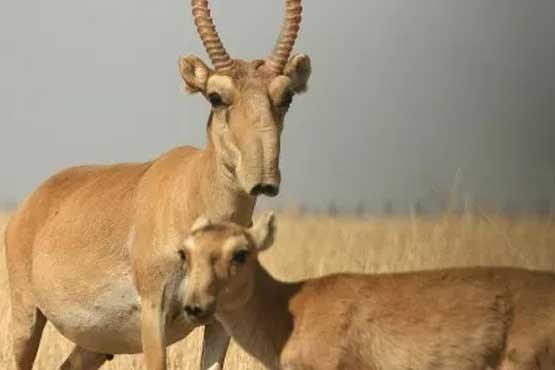 عجیب ترین حیوانات شناخته شده+ تصویر//////کارتابل قفل کرده است، عکس ها باز نمی شود////