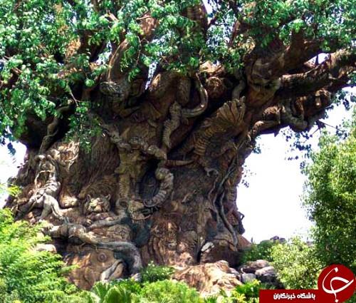 اثر هنری زیبا در یک درخت + عکس