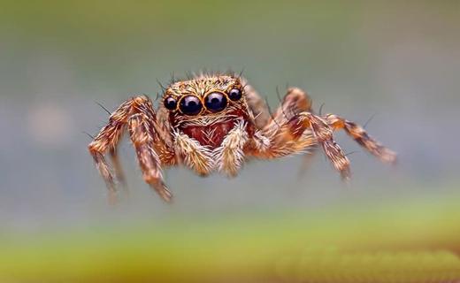 حشرات خیس به روایت تصویر+ تصاویر