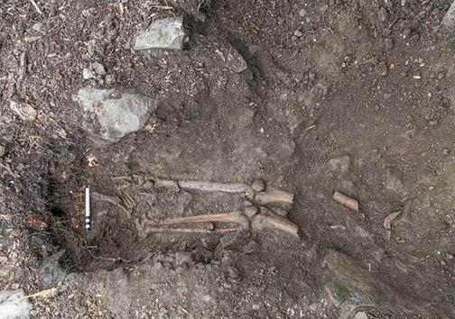 فسیل متعلق به قرونوسطی در ریشههای این درخت درهمتنیده شده است + تصاویر