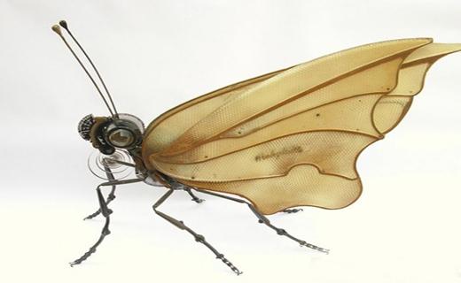 بی خطر ترین حشرات دنیا+ تصاویر