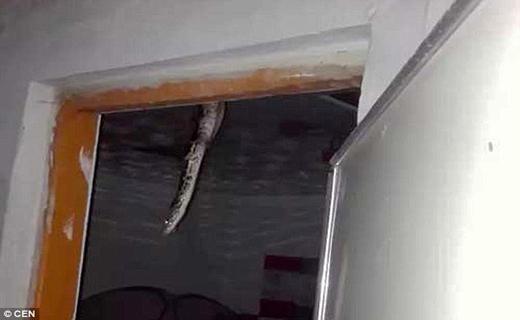 کشف یک پینتون در سقف خانه ای در چین+ تصاویر
