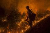 تالاب انزلی در آتش میسوزد