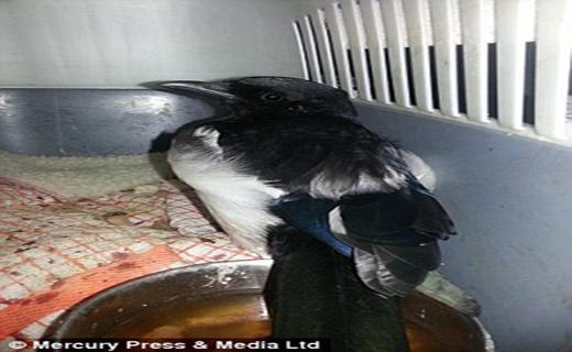 نجات پرنده نگون بخت از مرگ حتمی+ تصاویر