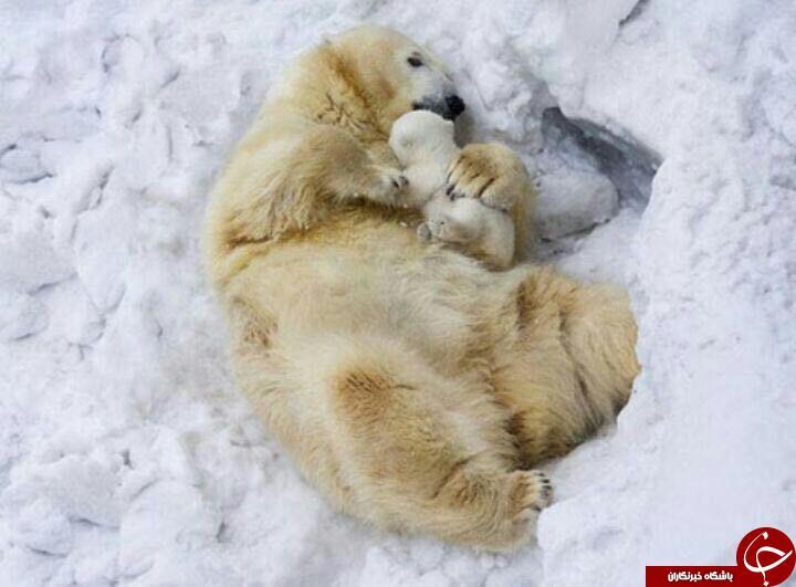 عکس خانوادگی وابراز محبت دردنیای حیوانات