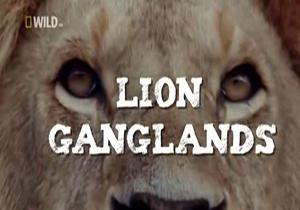 دانلود فیلم مستند حیرت انگیز حیات وحش آفریقا