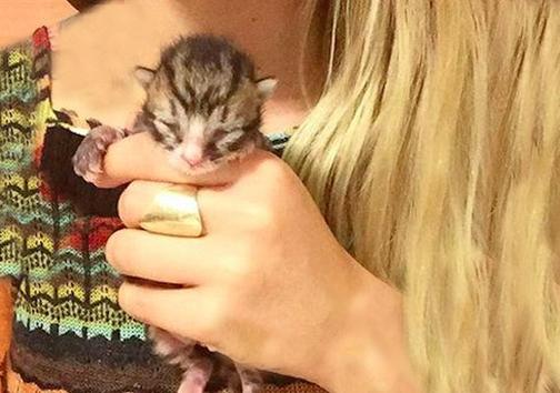 زنی که زندگیاش را وقف بچه گربههای بی سرپناه کرده است + تصاویر