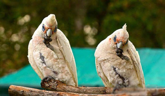 حیوانات دوقلوی جهان دیدنی است+عکس!