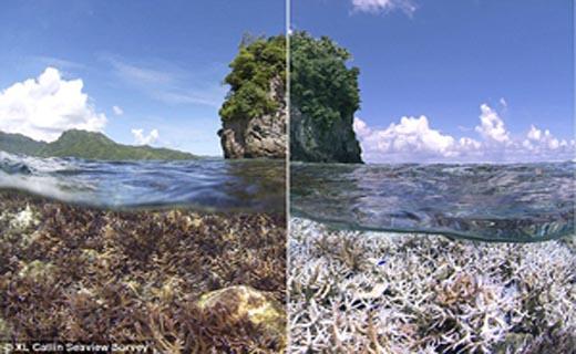 وقتی کرمهای ضدآفتاب بلای جان ماهیها میشوند + تصاویر