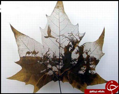 حکاکی روی برگ درختان+عکس
