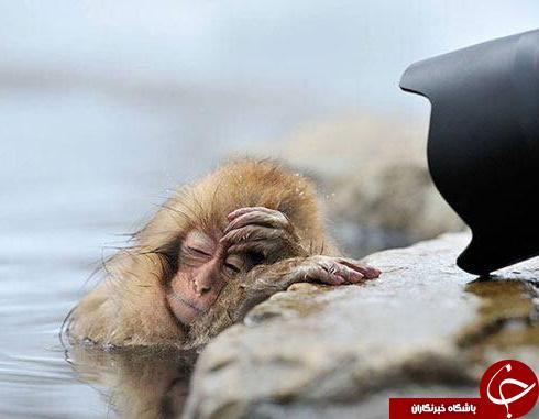 تصاویری دیدنی از دنیای خواب حیوانات( قسمت دوم)