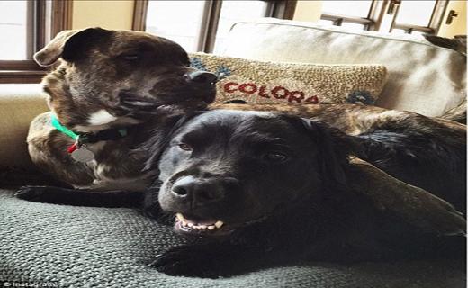 حمله وحشیانه سگ بولداگ به قهرمان اسکی المپیک+ تصاویر
