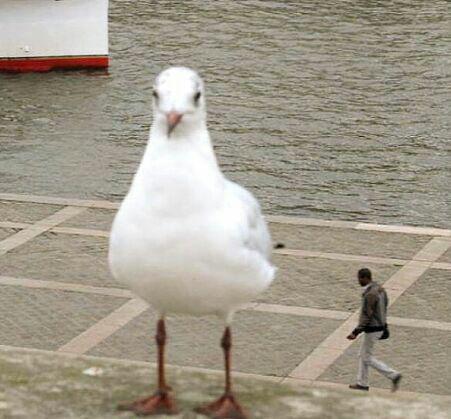 حامد کمیلی یا بازیگر ترکیهای؟ / گیتار سواری / کتاب ریاضی داعشی/ این اردکه یا خرگوشه؟