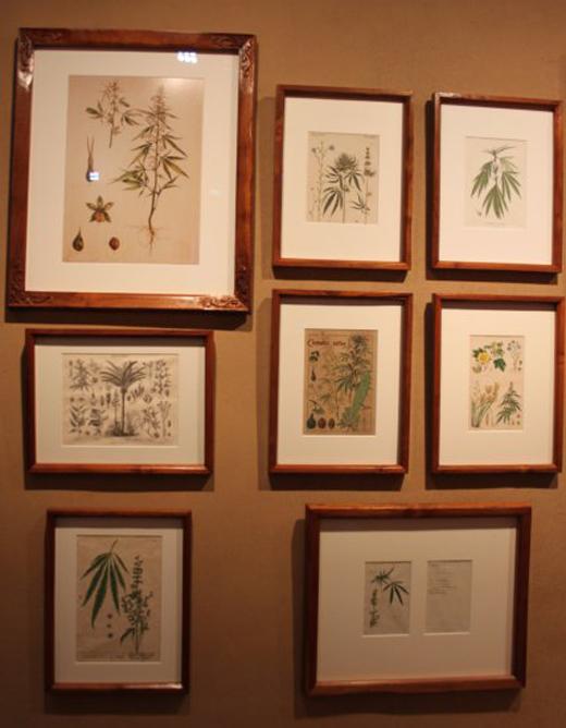 تاپ صبح////گیاهان مخدر در ویترینهای موزه آمستردام