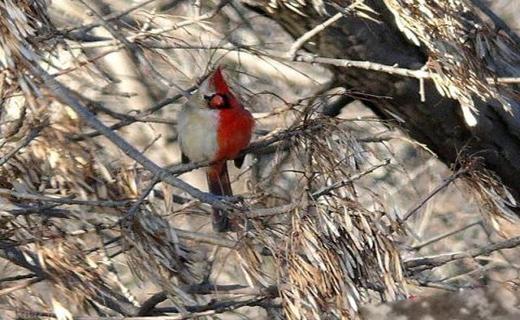 پرندهای که هم نر است و هم ماده! + عکس