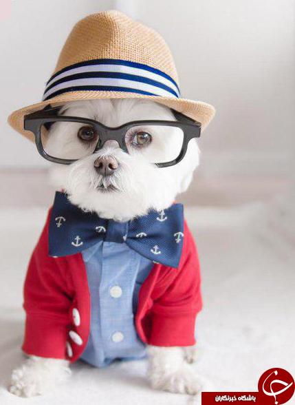 خوشتیپ ترین سگ دنیا+عکس