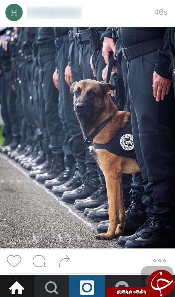 ادای احترام پلیس فرانسه به سگ + عکس