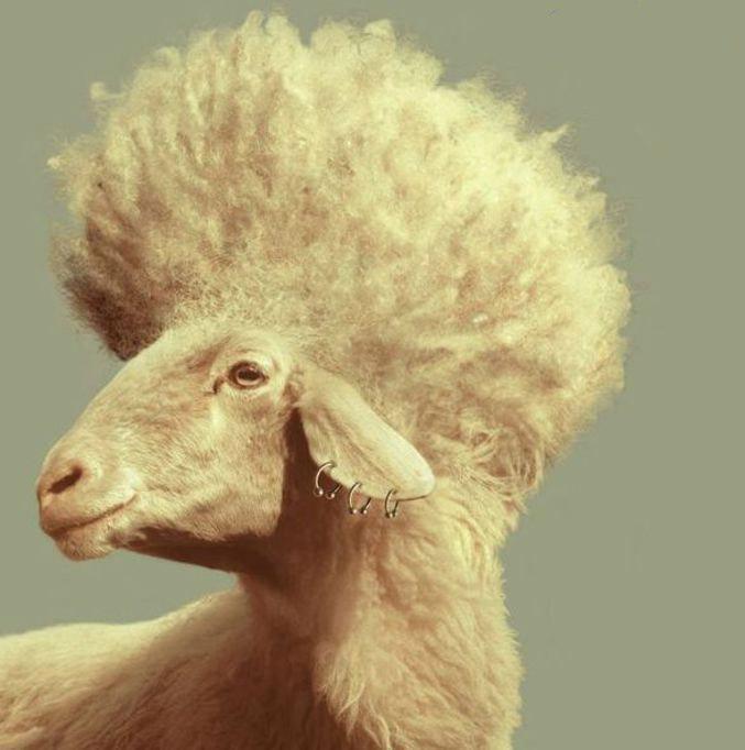 عجب اسکلت خوشمزه ای! / اینم شماره شناسنامه رییس جمهور! / فشن ترین گوسفند دنیا / انشاالله اینجا حموم نرید_(بخش چهاردهم)