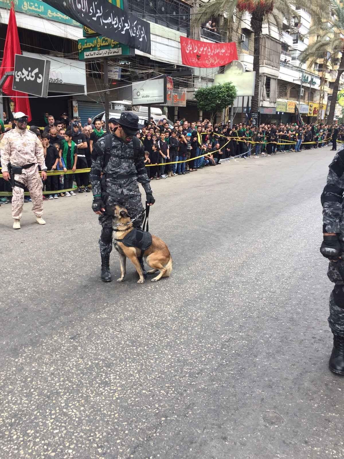 سگهای بمب یاب در یگان واکنش سریع در بیروت + تصاویر