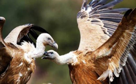 سرسخت ترین پرنده در حیات وحش+ تصاویر