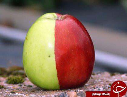 اسرار شگفت انگیز دنیای میوه ها+عکس