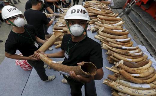 جنایت شکارچیان فقط برای یک «عاج» + تصاویر
