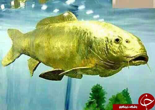 ماهی از جنس طلا + عکس