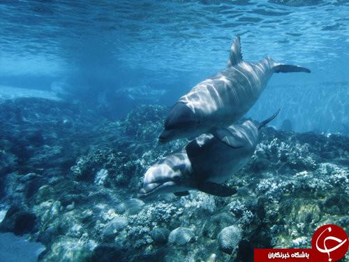 زیبا ترین تصاویر از زیر دریا + عکس
