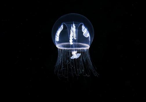 موجودات اعماق اقیانوس از چشم دوربین عکاسی + تصاویر