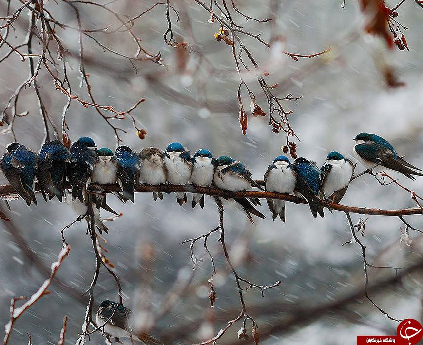 نگاهی به هم دلی دردنیای پرندگان+تصاویر
