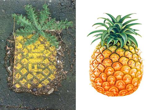 اشیا و انسانهایی که بسیار به هم شباهت دارند + تصاویر