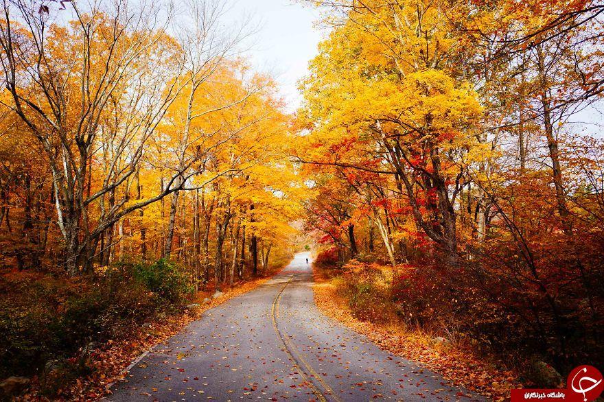 زیبا ترین جاده های پاییزی + عکس
