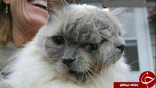 نگاهی به پیرترین گربه دوسر جهان+عکس