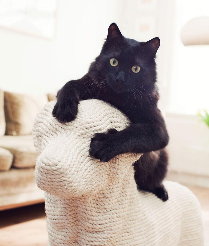 انتقام گربه ها از سگ ها + عکس