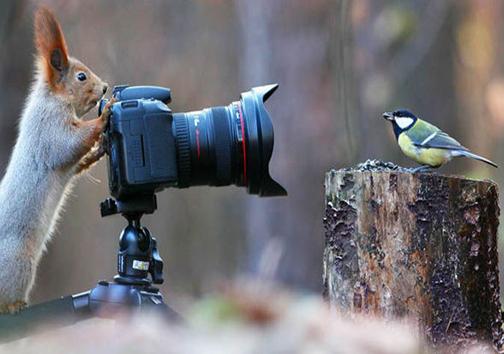 حیواناتی که عکاسی میکنند! + تصاویر