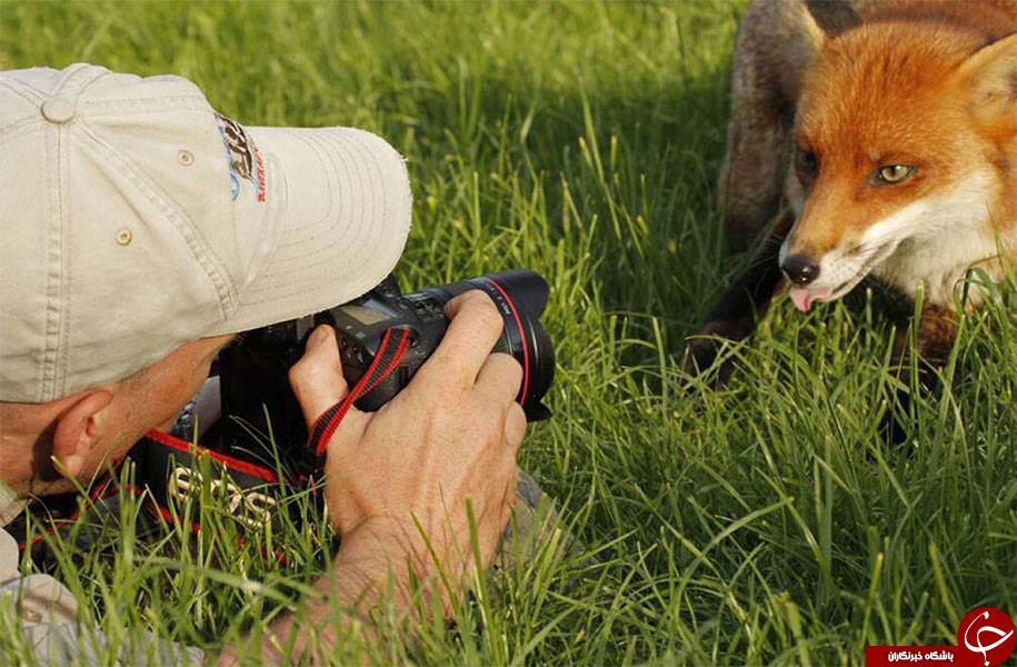 حیوانات مشتاق عکاسی + تصاویر