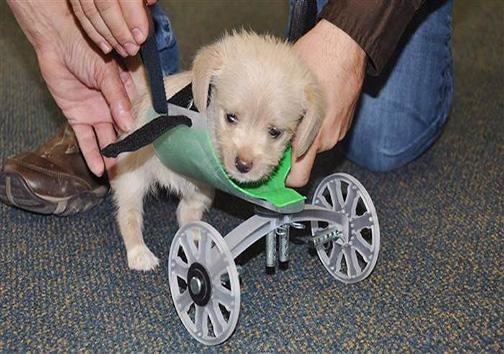 فناوری چاپ سهبعدی در خدمت حیوانات معلول