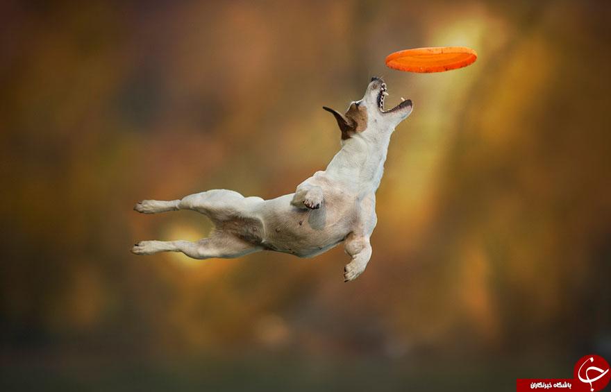 سگ های پرنده + تصاویر