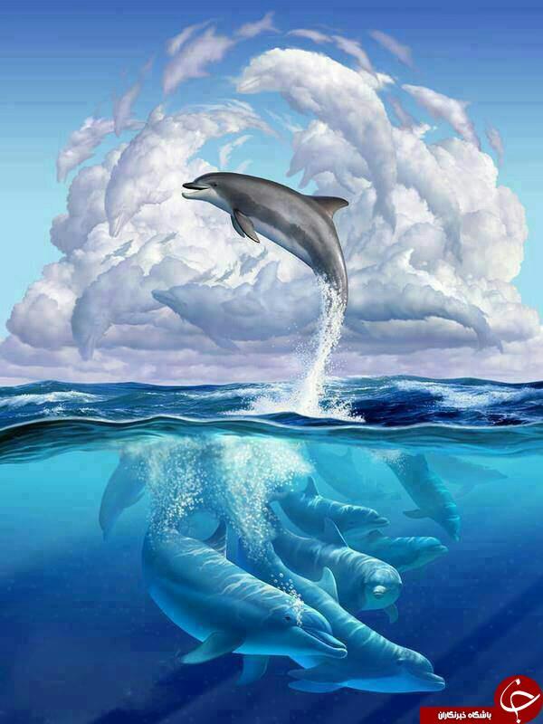 تصاویر زیبای شکار شده از دلفین ها + تصاویر