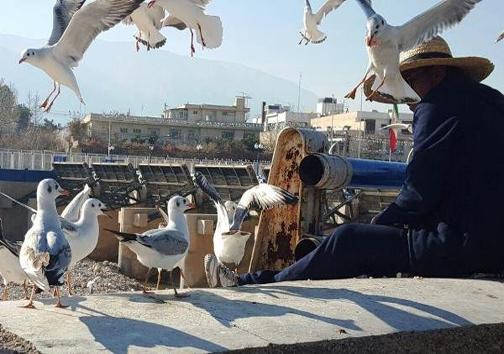 مرغان دریایی که این مرد رادوست دارند